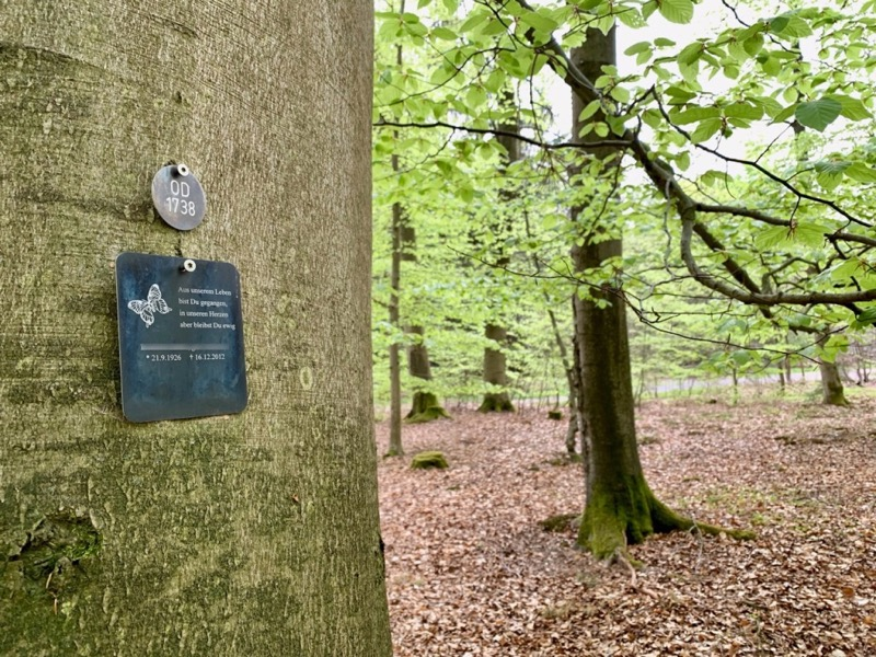 Drzewo naleśnym cmentarzu