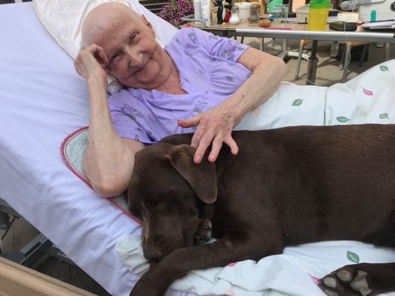 Pies terapeutyczny zpacjentką whospicjum