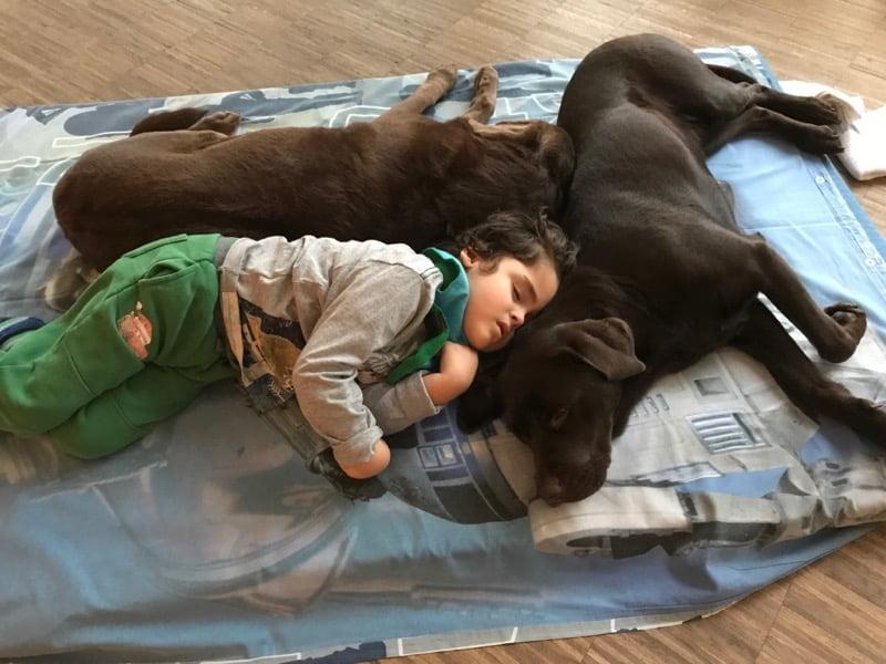 Psy terapeutyczny leżą obok dziecka