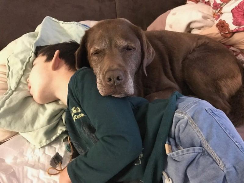 Pies terapeutyczny zdzieckiem whospicjum